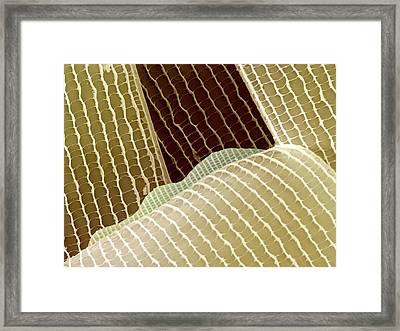 Moth Wing Scales Framed Print by Petr Jan Juracka