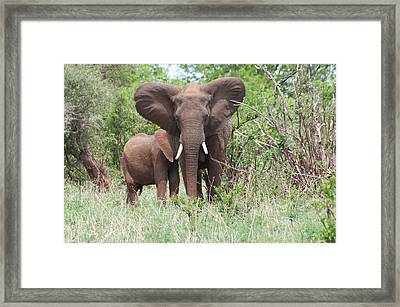 Mother And Baby Framed Print by Jim Heath