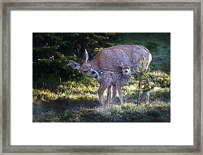 Framed Print featuring the photograph Mother And Baby by Tyson and Kathy Smith