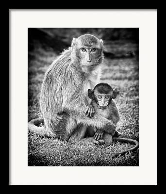Thailand Wildlife Framed Prints