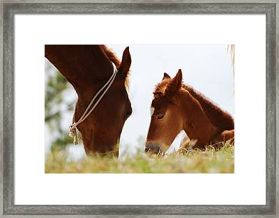 Mamma Is Watching... Framed Print