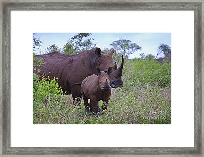 Mother And Baby Rhino Framed Print