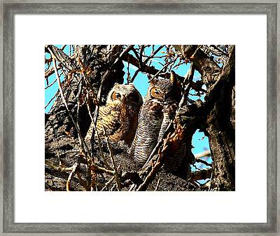Mother And Baby Framed Print by Steven Reed