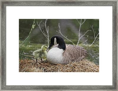 Mother And Baby Framed Print by Veronica Ventress
