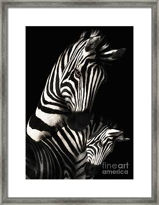 Mother And Baby Zebra Framed Print