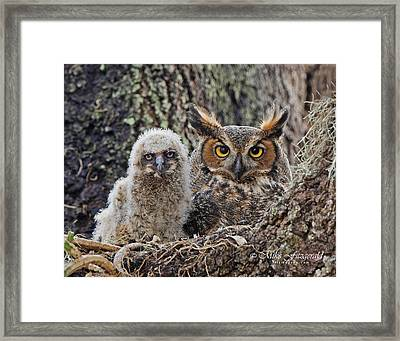 Mother And Chick Framed Print