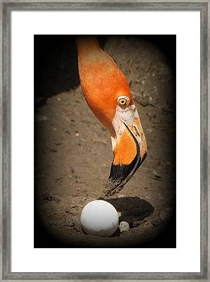 Framed Print featuring the photograph Mother And Child by Beth Vincent