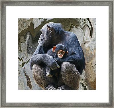 Mother And Child Chimpanzee 2 Framed Print