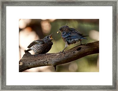 Mother And Child Framed Print by Kiril Kirkov