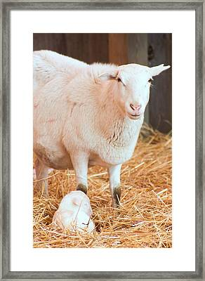Mother And Child Framed Print by Photographic Arts And Design Studio