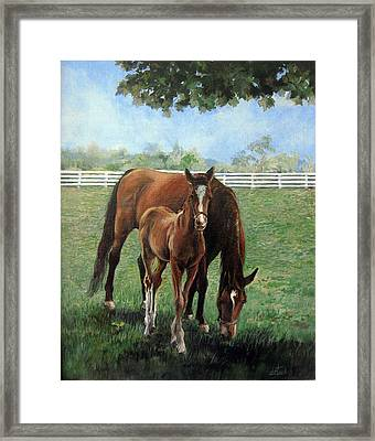 Mother And Colt Framed Print by Donna Tucker