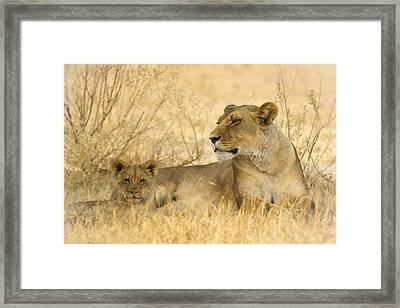 Mother And Cub Framed Print by Alison Buttigieg