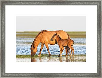 Mother And Foal Framed Print by Bob Decker