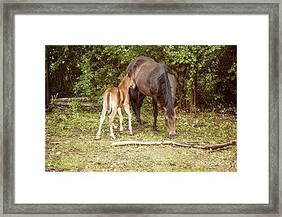 Mother And Foal Framed Print by Juli Scalzi