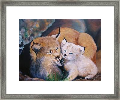 Mother And Kitten Bobcat Framed Print by Jean Yves Crispo