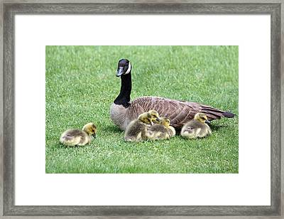 Mother And Young Framed Print