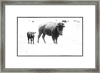 Mother Bison And Her Calf Framed Print by Melany Sarafis