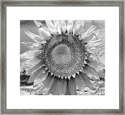 Mother Earth Unloved Framed Print