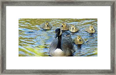 Mother Goose And Brood Framed Print