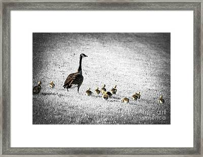 Mother Goose Framed Print by Elena Elisseeva