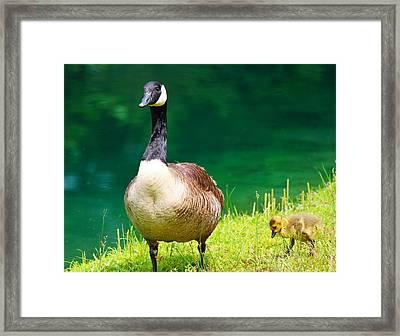 Mother Goose Framed Print by Ella Char
