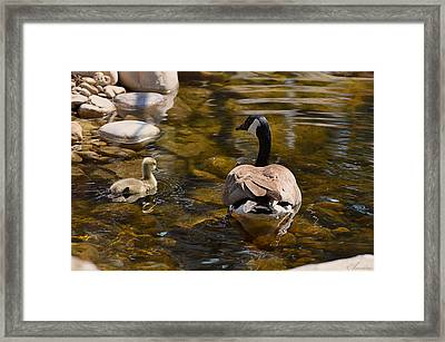 Mother Goose Il Framed Print