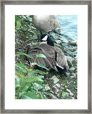 Mother Goose Framed Print by Nicki Bennett