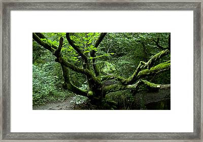 Mother Hazel Framed Print