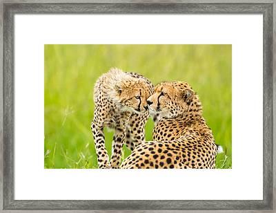 Mother Love Framed Print by 1001slide