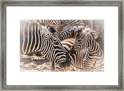 Mother Love Framed Print by Yeates Photography