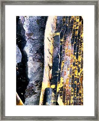 Mother Natures Aspen Abstract Art Framed Print