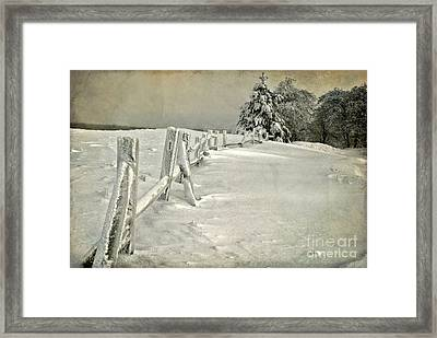 Mother Nature's Christmas Tree Framed Print