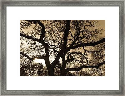 Mother Nature's Design Framed Print