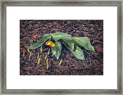 Mother Nurture Framed Print by Nancy Strahinic