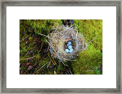 Mother Of Four Framed Print