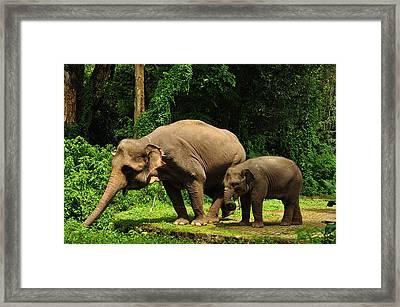Motherhood Framed Print by James Tanyu