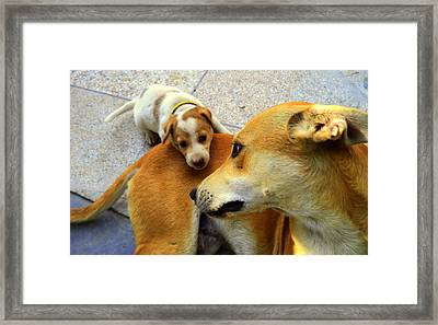 Mother's Affection Framed Print