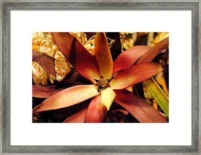 Mother's Day - After A Month Framed Print