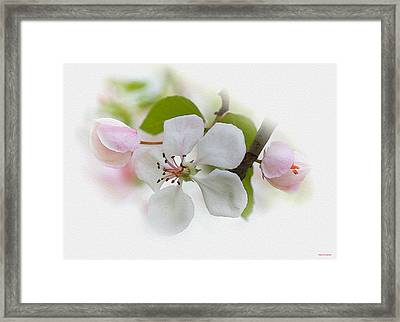 Mother's Day Framed Print by Ron Jones