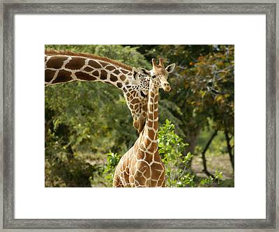 Mothers' Love Framed Print