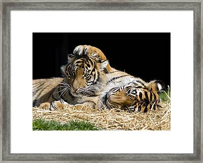 Mothers Loving Touch Framed Print