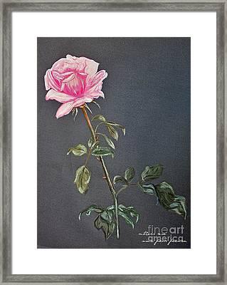 Mothers Rose Framed Print