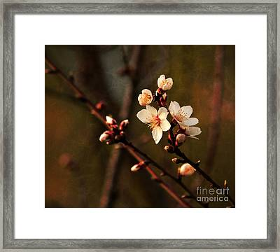 Framed Print featuring the photograph Mother's Spring Blossoms by Marjorie Imbeau