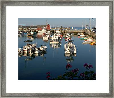 Framed Print featuring the photograph Motif  And Friends by Caroline Stella
