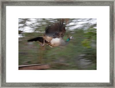 Motion In Air Framed Print by Mahendra Mithapara