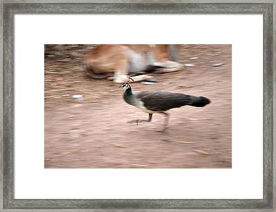 Motion With Emotion Framed Print by Mahendra Mithapara