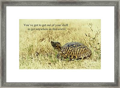 Motivating A Turtle Framed Print by Robert Frederick