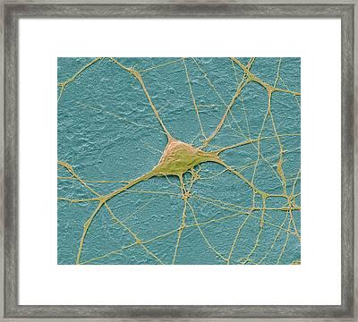 Motor Neurone Framed Print by Steve Gschmeissner