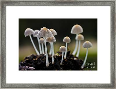 Mound Of Mushrooms Framed Print