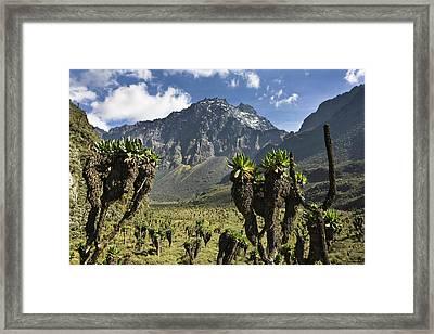 Mount Baker And Bujuku Bog, Rwenzori Framed Print
